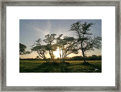 Framed Print featuring the photograph This One Is For You by Phil Mancuso