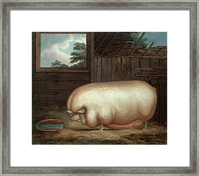 This Remarkable Animal Framed Print