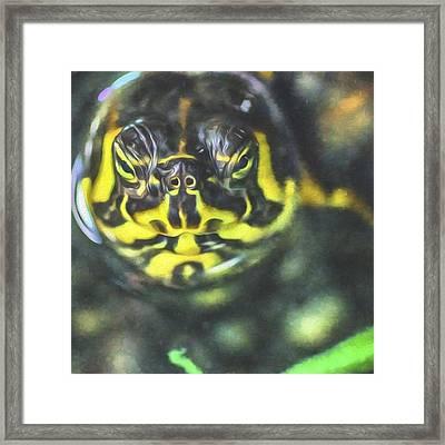 This Tortoise Looks Serious. Hmmm Framed Print