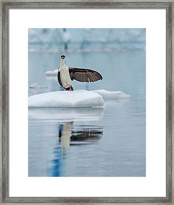 Framed Print featuring the photograph This Way by Tony Beck