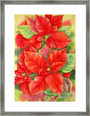 This Year's Poinsettia 1 Framed Print