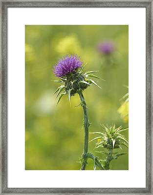 Thistle And Mustard Framed Print by Doug Herr
