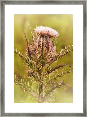 Thistle And Thorns Unfolding Framed Print