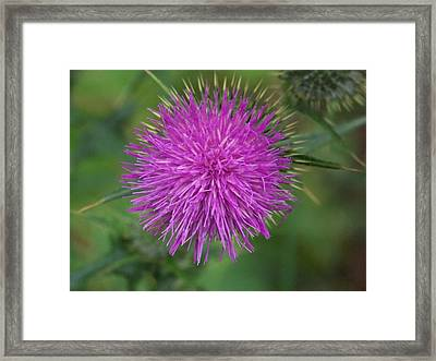 Framed Print featuring the photograph Thistle by Angi Parks