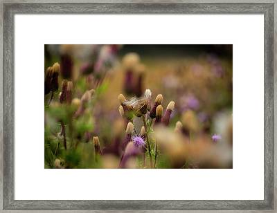 Framed Print featuring the photograph Thistle Babies by Jeremy Lavender Photography