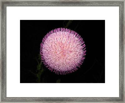 Thistle Bloom At Night Framed Print