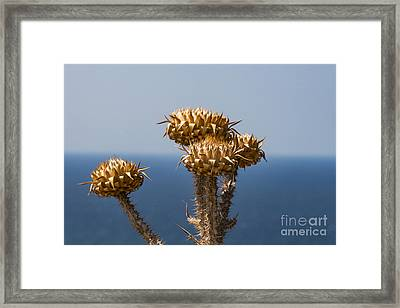 Thistle By The Sea Framed Print