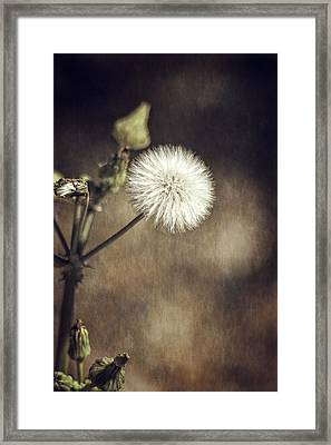 Thistle Framed Print by Carolyn Marshall