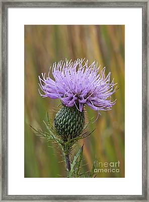 Thistle - D009631 Framed Print