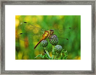 Thistle Dragon Framed Print by Michael Peychich