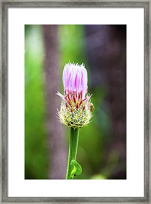 Thistle In The Canyon Framed Print