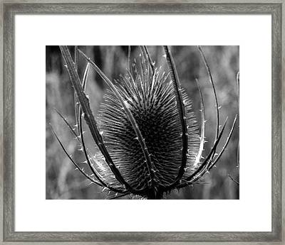Framed Print featuring the photograph Thistle by Keith Elliott