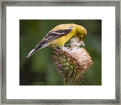 Thistle Seed Gathering Framed Print by Don Durfee