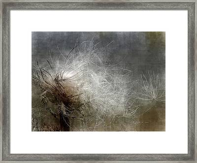 Thistle Seed Framed Print by Ludwig Keck