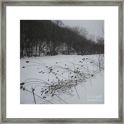 Thistle Seeds Framed Print by Vonicia Verton