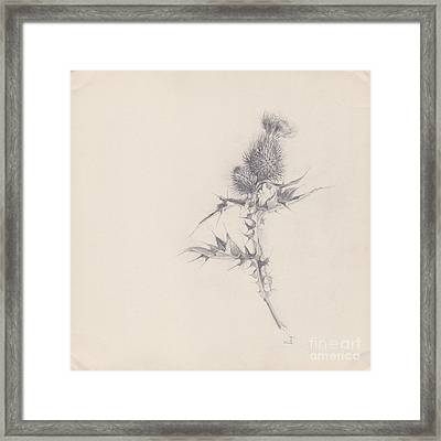 Thistle Sketchpad Page Framed Print