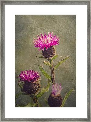 Thistle Framed Print by Wim Lanclus