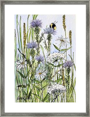 Thistles Daisies And Wildflowers Framed Print