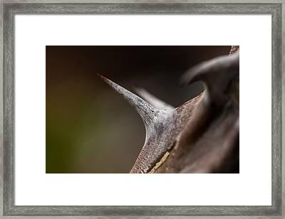 Thorn Framed Print