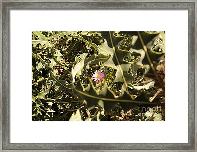 Thorn Love Framed Print by Oscar Moreno