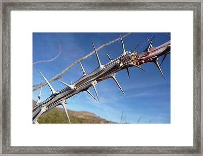 Framed Print featuring the photograph Thorns Along The Apache Trail by Joel Deutsch