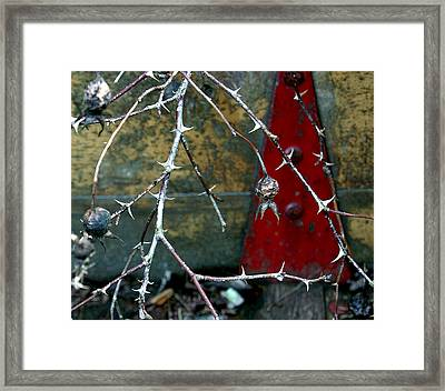 Thorns And Red Triangle Framed Print