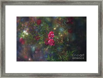 Thorns And Roses II Framed Print