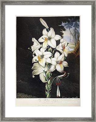 Thornton: White Lily Framed Print