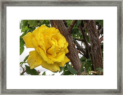 Framed Print featuring the photograph Thorny Love by Charles Ables