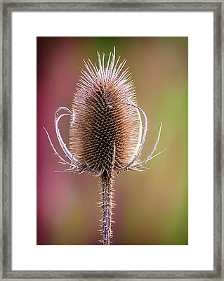 Thorny Framed Print by Martin Newman