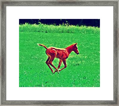 Thorobred Framed Print by Bill Cannon