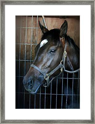 Thoroughbred Framed Print by Cathy Harper