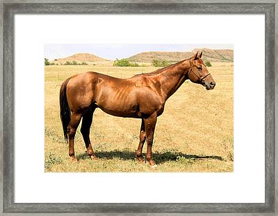 Thoroughbred From Right Side Framed Print by Cheryl Poland