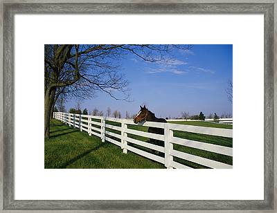 Thoroughbred Horse Lexington Ky Framed Print by Panoramic Images