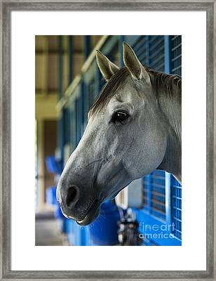 Thoroughbred Framed Print by John Greim