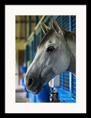 Thoroughbred Race Framed Prints
