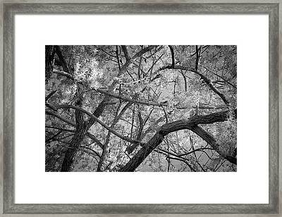Those Branches -  Framed Print