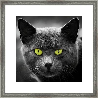 Those Eyes Cat Square Framed Print