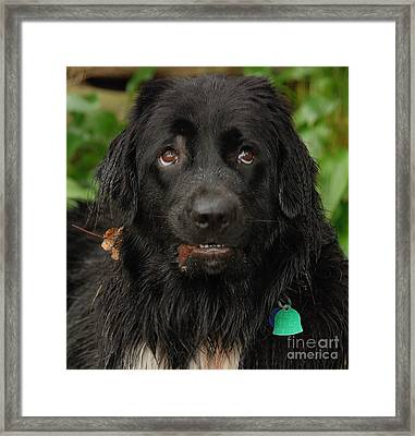 Framed Print featuring the photograph Those Eyes by Debbie Stahre