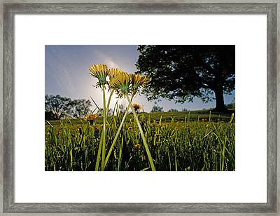 Those Flowers For You Framed Print