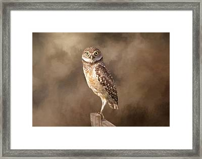 Those Golden Eyes Framed Print