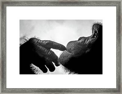 Thoughtful Chimpanzee Framed Print