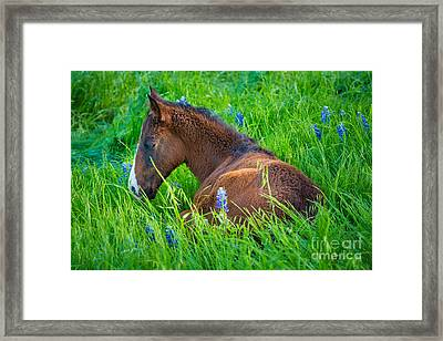 Thoughtful Foal Framed Print by Inge Johnsson