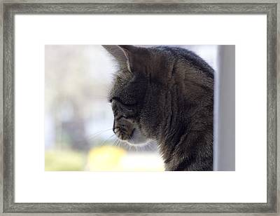 Longing... Framed Print by Helga Novelli