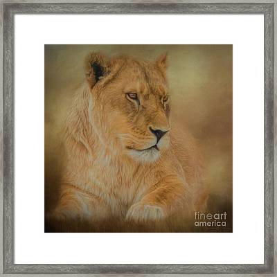 Thoughtful Lioness - Square Framed Print by Teresa Wilson