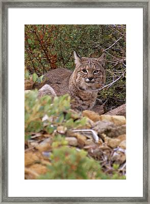 Thoughtful Stare Framed Print
