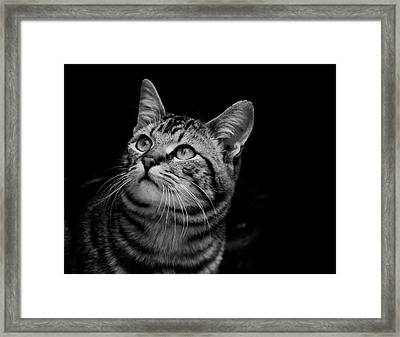 Framed Print featuring the photograph Thoughtful Tabby by Chriss Pagani