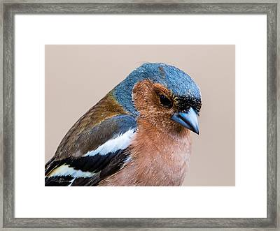 Thoughtful Framed Print by Torbjorn Swenelius