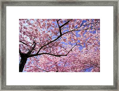 Thoughts Framed Print by Mitch Cat