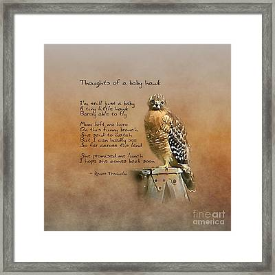 Thoughts Of A Baby Hawk Framed Print